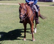 Tabasco-Jac-Jetn-Castrone-Quarter-Horse-sella
