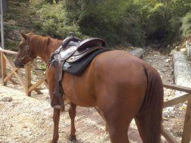 Tabasco-Jac-Jetn-Castrone-Quarter-Horse-trekking