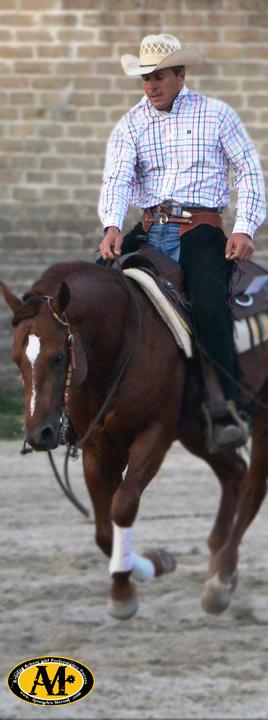 alessandro-meconi-reining-quarter-horse