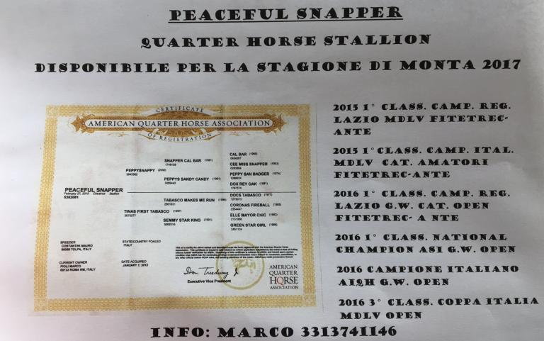 stallone-quarter-horse-peaceful-snapper-certificato-e-score-record