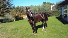 stallone-quarter-horse-peaceful-snapper