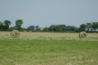 allevamento-appaloosa-blue-ranch-fieno