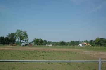 allevamento-appaloosa-blue-ranch-paddok2