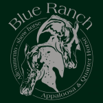 blue-ranch-allevamento-appaloosa-e-quarter-horses