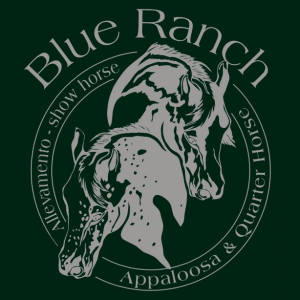 blue-ranch-allevamento-appaloosa-e-quarter-horses