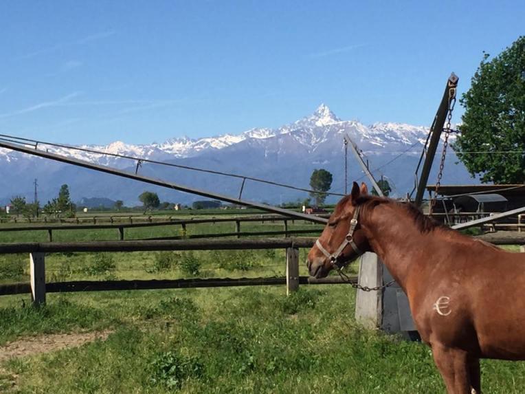 equitech-international-barrel-quarter-horses-e-il-re-di-pietra