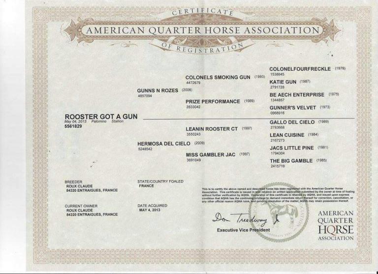 rooster-got-a-gun-stallone-palomino-quarter-horse-certificato