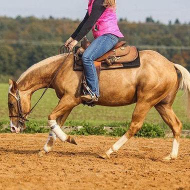 rooster-got-a-gun-stallone-palomino-quarter-horse