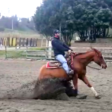 alex-meconi-super-star-yatt-castrone-quarter-horse-reining-sliding-stop-dx