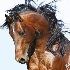 mafia-fame-barrel-quarter-horse-stallion