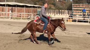 quarter_horse_female_rosalitaz_meconi_spin
