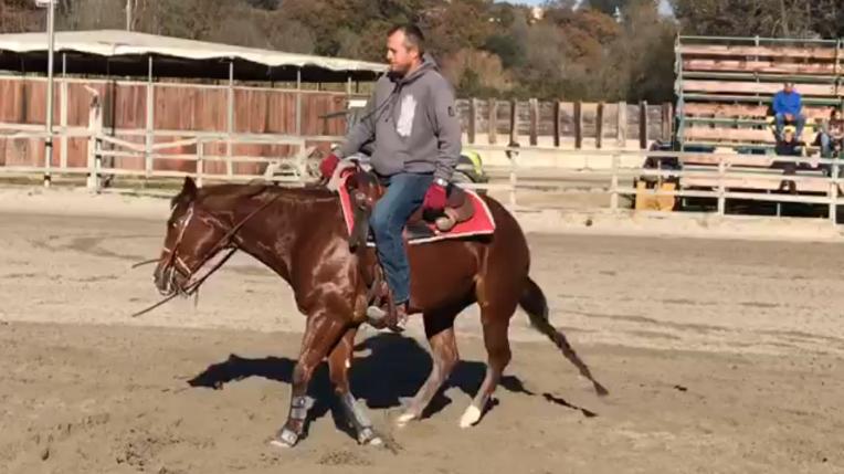 quarter_horse_female_rosalitaz_meconi_spin_right