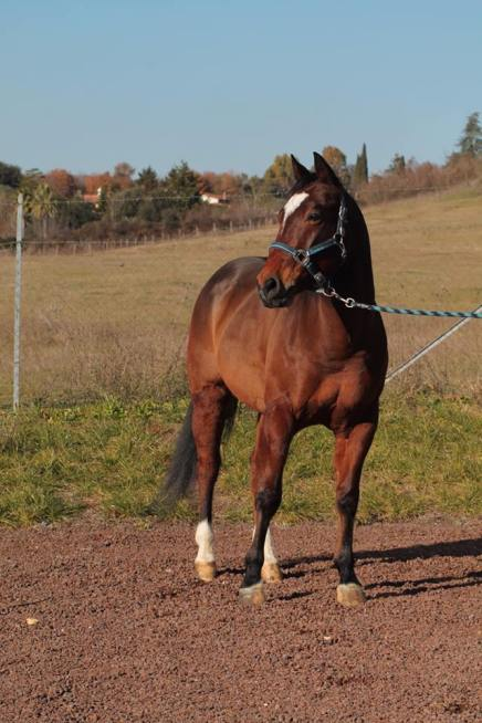 snapper_smokin_quarter_horse_in_vendita_front