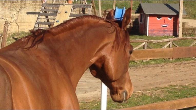 super-star-yatt-castrone-quarter-horse-reining-collo