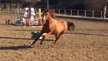 super-star-yatt-castrone-quarter-horse-reining-liberta