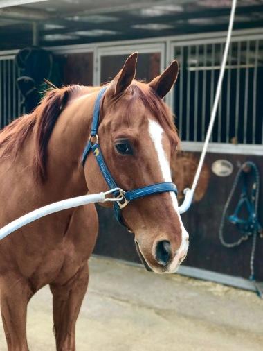 super-star-yatt-castrone-quarter-horse-reining-scuderia