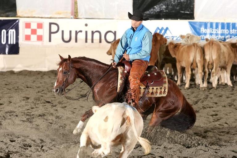 Ans Mokie Cat cutting quarter horse stallion
