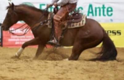 ANS_MOKIE_CAT_Stallone_Quarter_Horse_Santini_Cutting