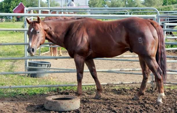 ANS_MOKIE_CAT_Stallone_Quarter_Horse_Santini_Left