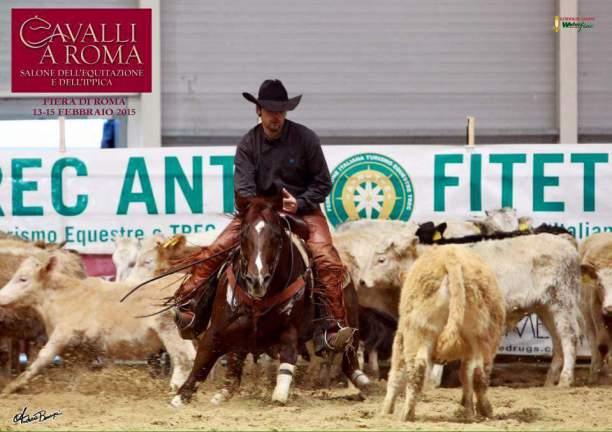 ANS_MOKIE_CAT_Stallone_Quarter_Horse_Santini_Work