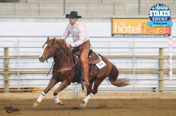 ANS_SNACK_CAT_Quarter_Horse
