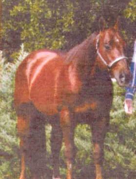 FRECKLES_MERADA_Stallone_Quarter_Horse
