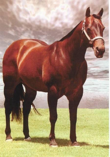 Doc_O'Lena_Stallone_Quarter_Horse