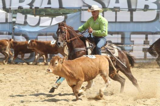 Great_Heartacre_Barone_Quarter_Horse_Stallion_Team_Penning_Sterbini_Competition