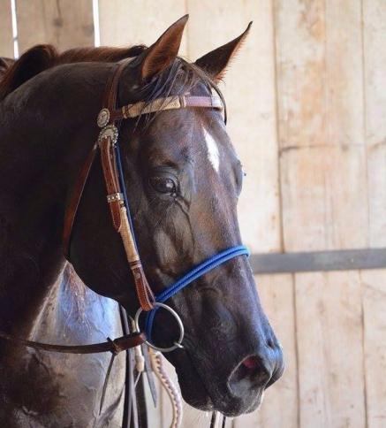 Great_Heartacre_Barone_Quarter_Horse_Stallion_Team_Penning_Sterbini_Copertina