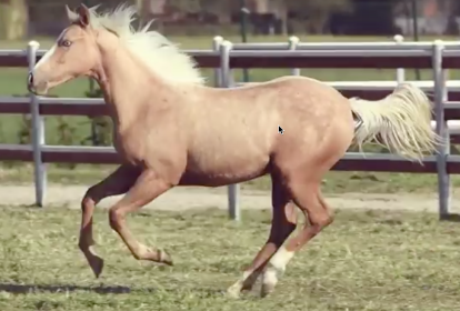 GUNNABLUEEYED Palomino quarter horse femmina (2016)