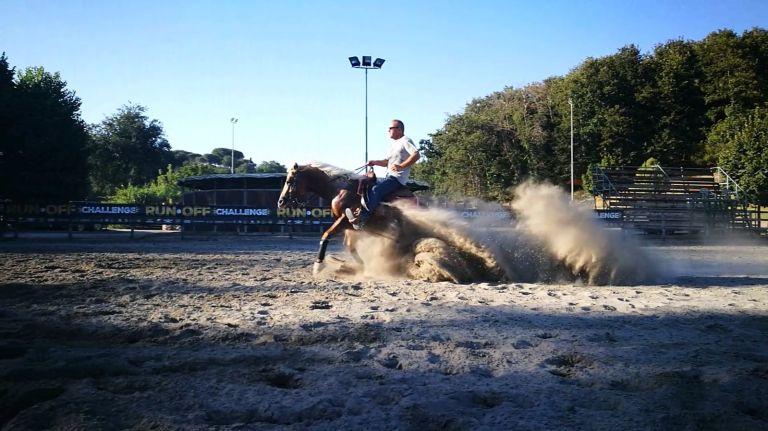 SHINING N SNAPPER PALOMINO QUARTER HORSE STALLION