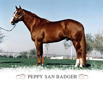 Peppy_San_Badger_Stallone_Quarter_Horse