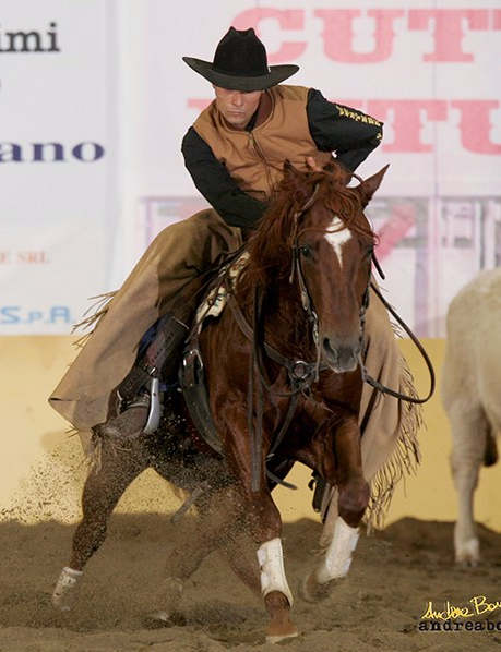 stallone-quarter-horse-ans-wyatt-pep-2002-cutting-and-working-cow-horse-champion1.jpg