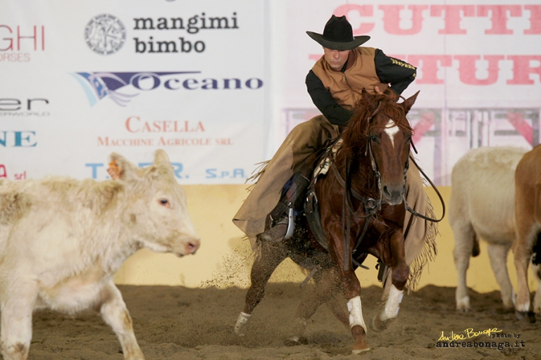 Stallone Quarter  Horse ANS WYATT PEP (2002) Cutting and Working Cow Horse Champion.jpg