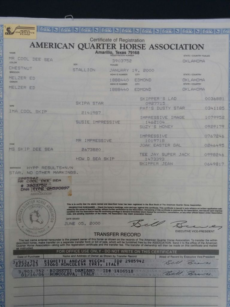 MR-COOL-DEE-SEA-Stallone-Quarter-Horse-Certificato.jpeg