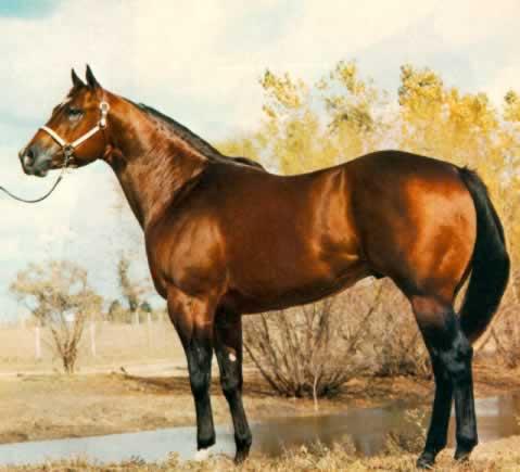 mr-impressive-STALLONE-QUARTER-HORSE