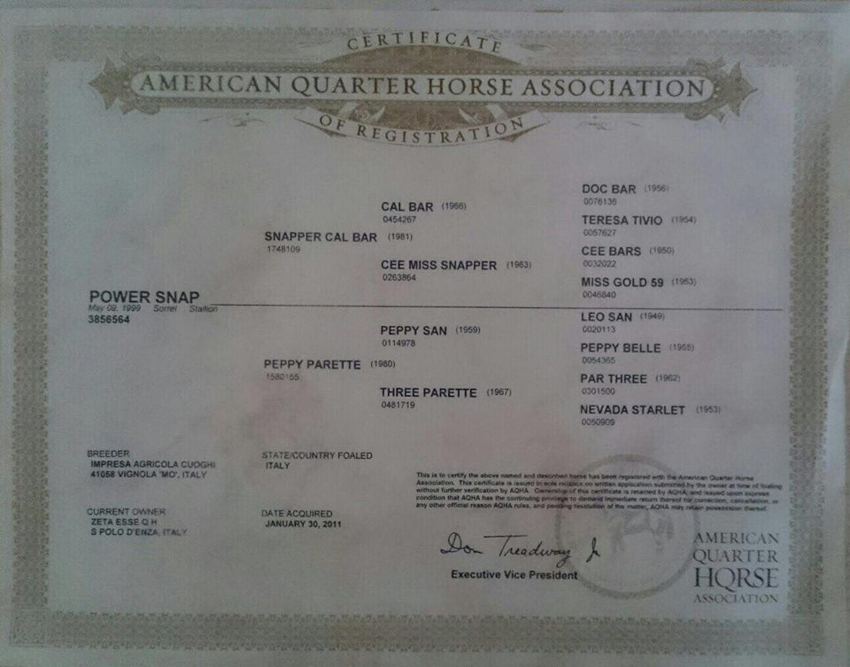 POWER-SNAP-Stallone-Quarter-Horse-Sauro-Reining-Certificato