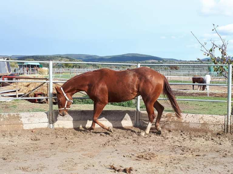 TOUCH-ME-COOL-Puledro-Quarter-Horse-Sauro-Left