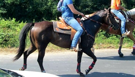 fattrice-quarter-horse-db-return-terminator-2005-Linea da Reining-in-vendita trekking