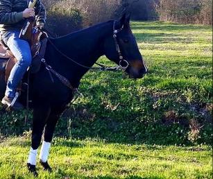 fattrice-quarter-horse-db-return-terminator-2005-Linea da Reining-in-vendita