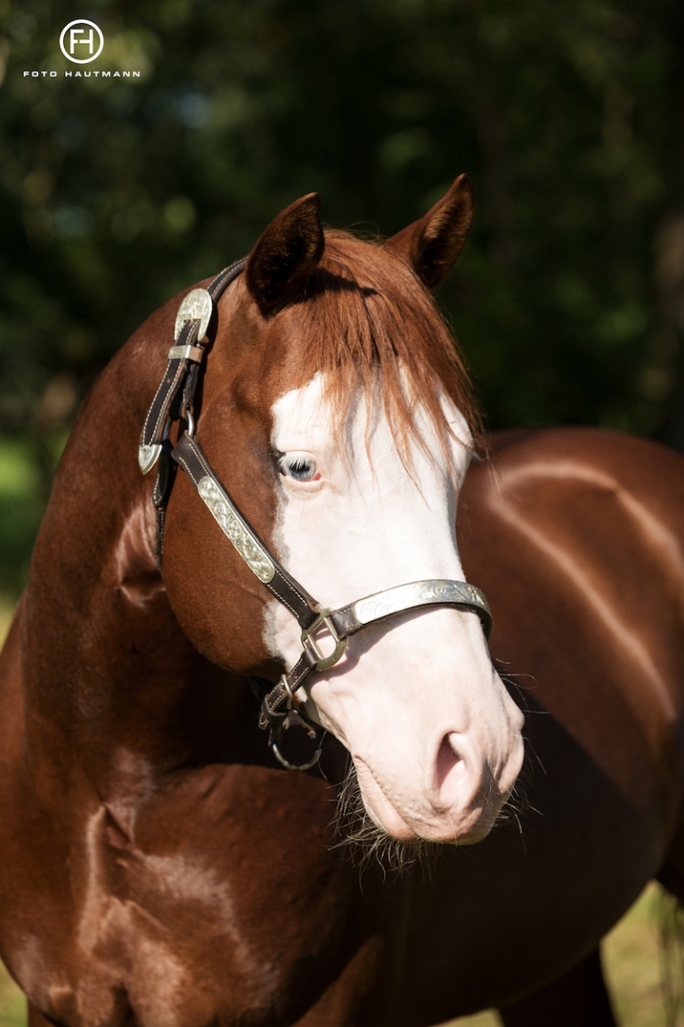 germany-reining-quarter-horse-stallion-at-stud-nd-gun-sawyer-2010 ears