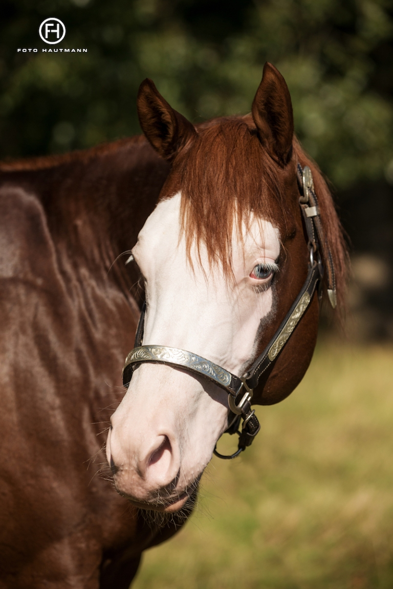 germany-reining-quarter-horse-stallion-at-stud-nd-gun-sawyer-2010 face