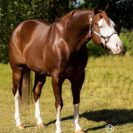 germany-reining-quarter-horse-stallion-at-stud-nd-gun-sawyer-2010 structure