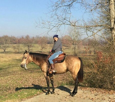 isa pellicci mr chocolte performance quarter horse stallion buckskin