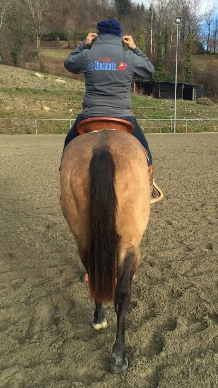 merchandise mr chocolte performance quarter horse stallion buckskin