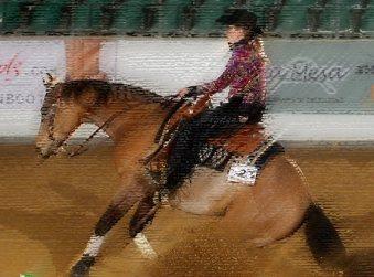 mr chocolte performance quarter horse stallion buckskin stop