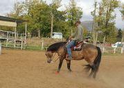 mr chocolte performance quarter horse stallion buckskin