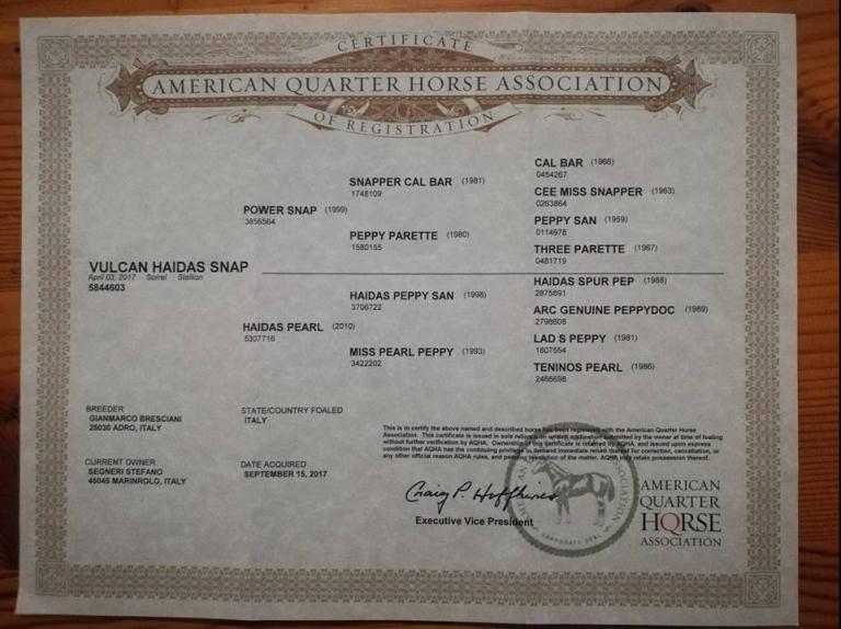 VULCAN-HAIDAS-SNAP-Puledro-Quarter-Horse-Sauro-Certificato