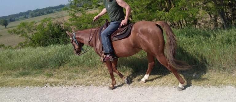 ar-please-dont-go-castrone-quarter-horse-2