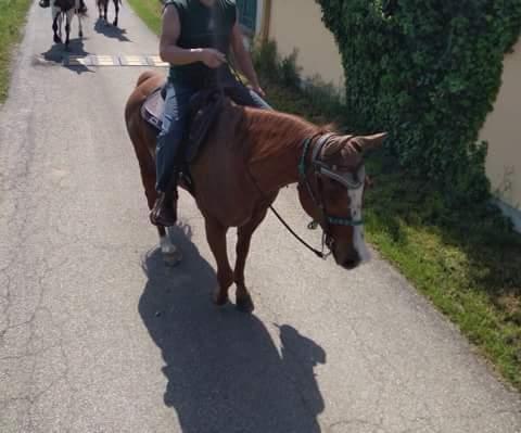 ar-please-dont-go-castrone-quarter-horse-3
